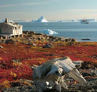 Arctic Tundra Vegitation